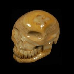 bruin-Chalcedon-schedel