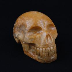 honingcalciet schedel