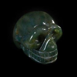 mosagaat-schedel