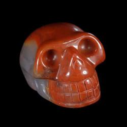 Chalcedon speciaal schedel