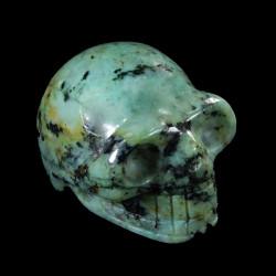 afrikaans Turkoois schedel