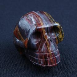 Tijgerijzer schedel