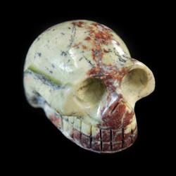 Jadoucillo-schedel