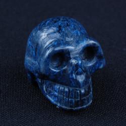 Dumortieriet schedel